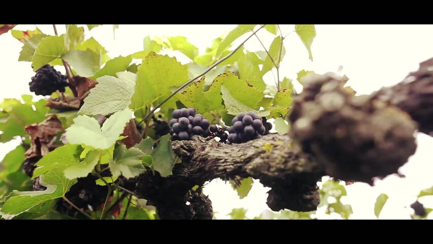 Video 1 Waßmer Martin Weingut