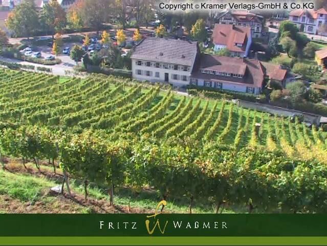 Video 1 Waßmer Fritz Weingut