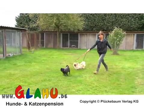 Video 1 Glahu Tierpension, Inh. Angela Bernhardt