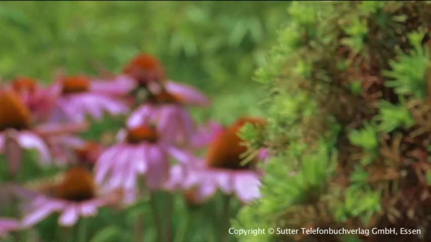 Video 1 Lefèvre Garten- und Landschaftsbau
