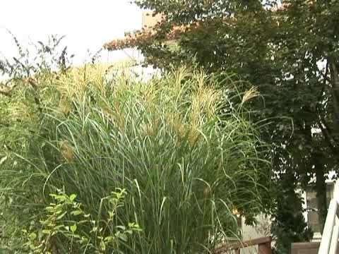 Video 1 Alten- und Pflegeheim Senioren-Wohnanlage St. Johannis