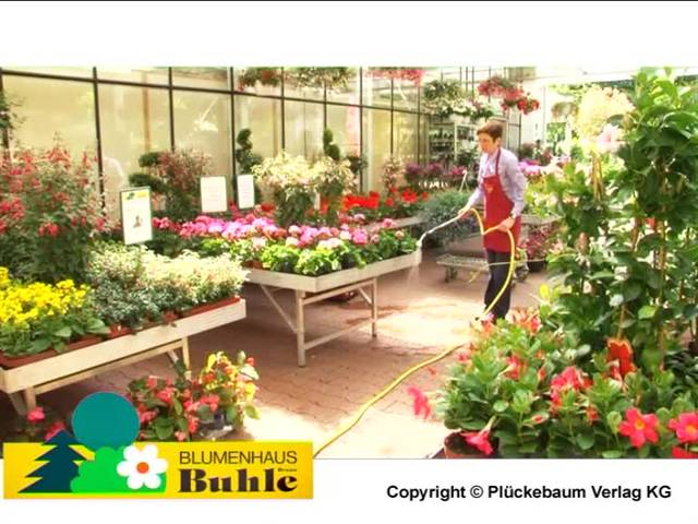 Video 1 Blumen Buhle