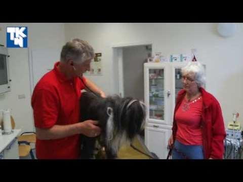 Video 1 Tierarztpraxis Dr. Wiedemann
